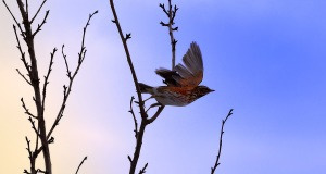 flying-bird-1328802494Px7